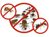Для борьбы с насекомыми